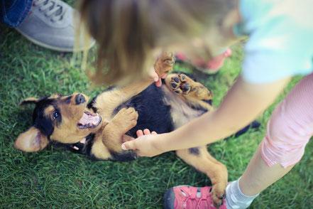 Kinderkontakt ist auch sehr wichtig! Die Welpen lieben Kinder!