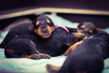 Nach dem großen Säugen an Mamas Zitze wird erst einmal geschlafen.