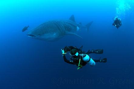 Galapagos Shark Diving - Buceador tomando fotos del tiburón ballena