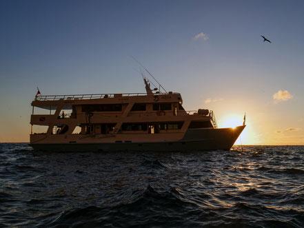 Galapagos Shark Diving - Boat Dive Expedition Galapagos Islands