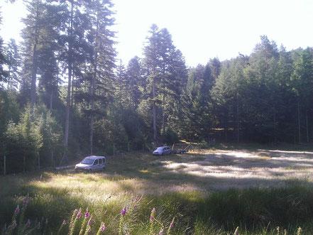 A gauche la parcelle de plusieurs hectares de Sapin.