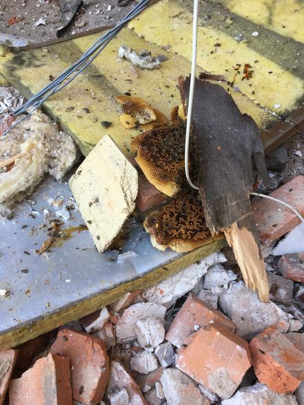 Reste de cire, couvain naissant et quelques abeilles
