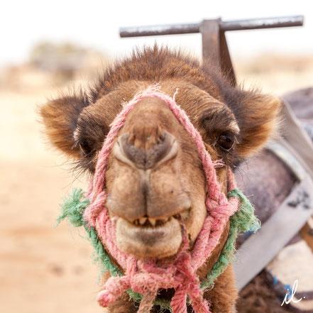 """Quoi ma gueule !"" Chegaga, Maroc, Isaure LAMBERT"