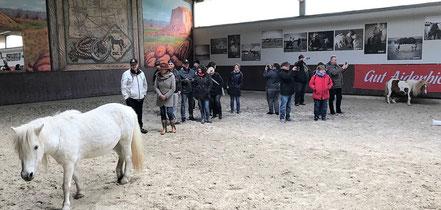 Auch Pony-Wallach CHICO begrüßt den Knobelclub Moin-Moin