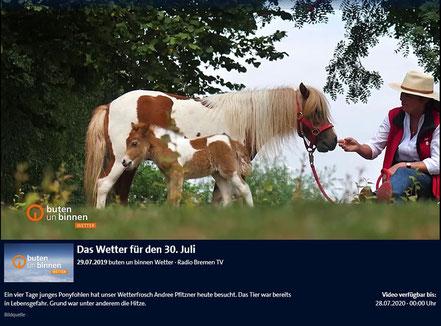 """Lady Marian - erst 4 Tage alt und schon die Wetterfee bei """"buten un binnen"""""""