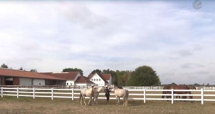 SAT1regional NS auf der Ballermann Ranch bei Annette u. Andre Engelhardt - Bild aus dem TV-Beitrag: https://www.sat1regional.de/marke-ballermann-beschert-ehepaar-aus-niedersachsen-reichtum/