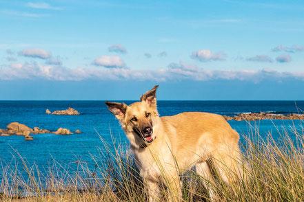 Hundetraining, Hundewissen