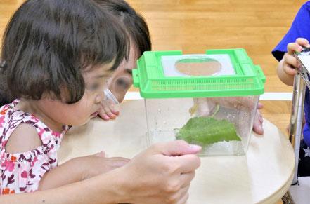 モンテッソーリの個別活動で、1歳児が興味をひかれてカタツムリの動く様子に見入っています。