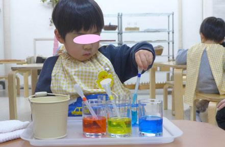 幼児教室のフィオーレコース(2歳児)で、モンテッソーリ活動で、生徒が色水のお仕事に取り組んでいます。いる