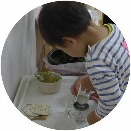 幼児教室ステッラコース1歳児)のモンテッソーリ活動で花を活ける活動を集中して行っています。