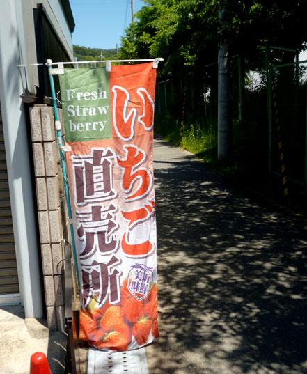 庭先の幟(のぼり)が目印>右側は萱野東小学校。