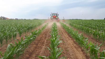 Bild Mais in weiter Reihe, Hacken und Drillen der Untersaat