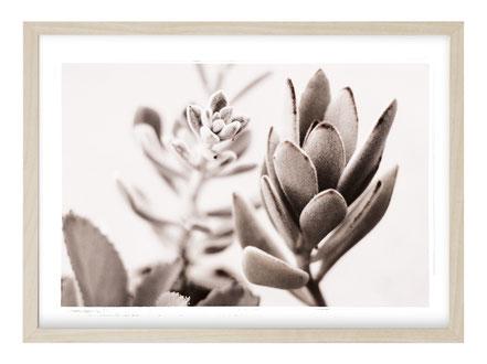 Poster Quer, Kunstdruck, Poster Blume, Bild Blume