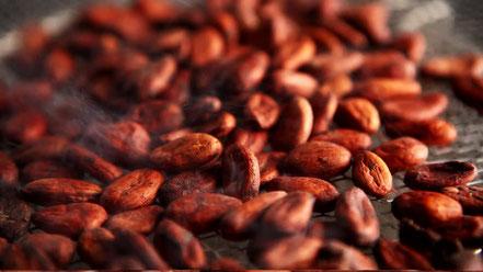 fèves de cacao et poudre