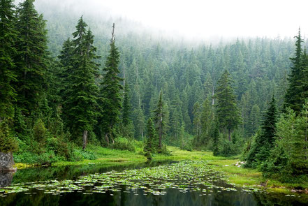 North Vancouver Rainforest