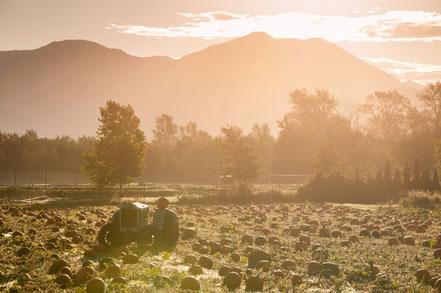 Fall Scene Fraser Valley