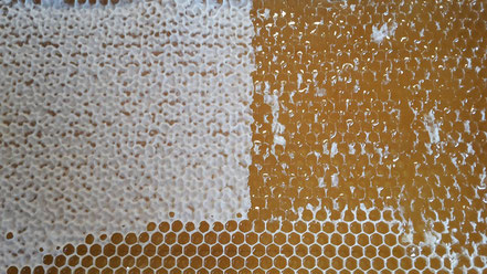 Entdeckelte Honigwabe