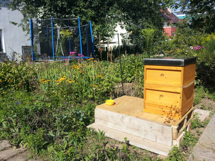 Die Bienen an ihrem neuen Platz im Garten