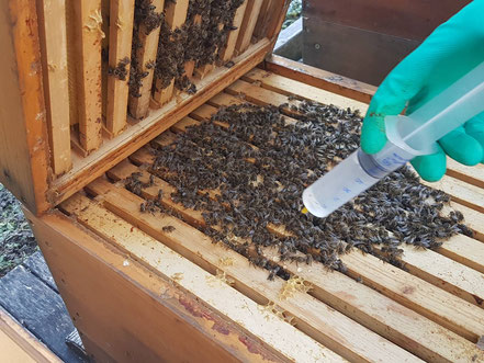 Oxalsäurelösung wird mit einer Spritze in die Wabengassen geträufelt.