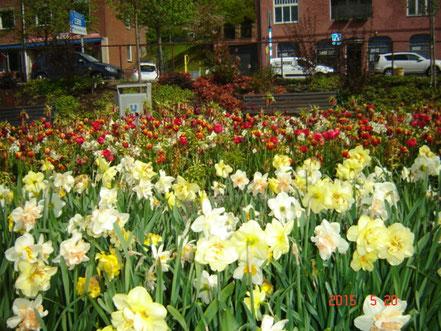 Ulricehamn im Frühjahr