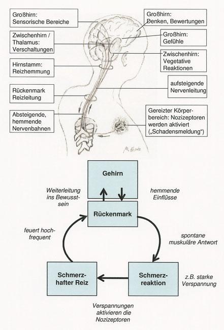 Schmerzwahrnehmung, Schmerzverarbeitung