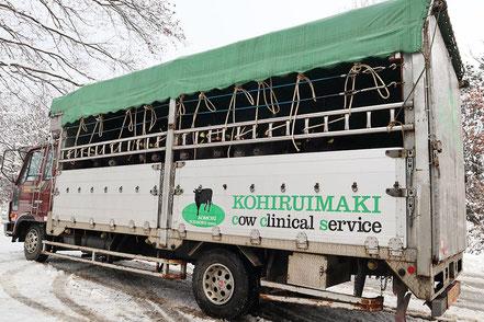 青森県家畜市場へ向かう和牛子牛