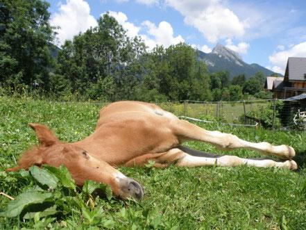 Das-Pferd-schläft