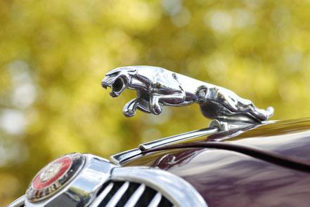 Jaguar mascotte de calandre