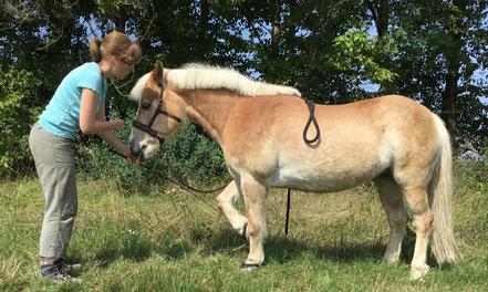 aHUT, Hanna Neubauer, entspannt spazierengehen Pferd, Zirkuslektionen Pferd
