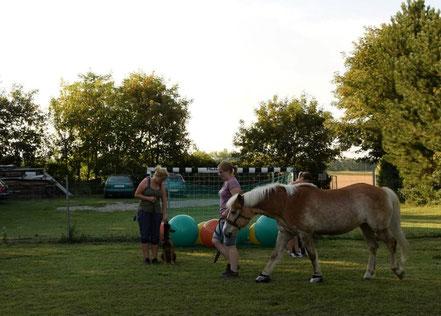Hundetrainingsplatz mit Pferd, Antischrecktraining Pferd Hund, entspannt Spazierengehen mit Pferd, entspannt Pferd und Hund, Hanna Neubauer, aHUT