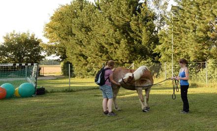 Hanna Neubauer, aHUT, Antischrecktraining Pferd, entspannt spazierengehen mit Pferd, Physiotherapieübungen Pferd, Hundetrainingsplatz mit Pferd