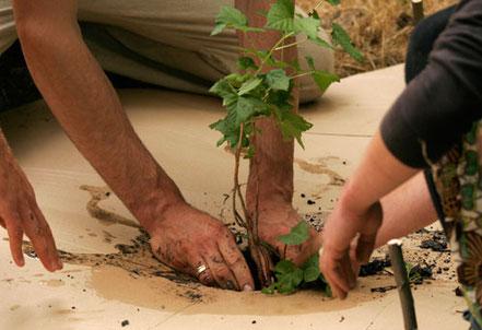 plan d'un arbre lors d'un stage de permaculture