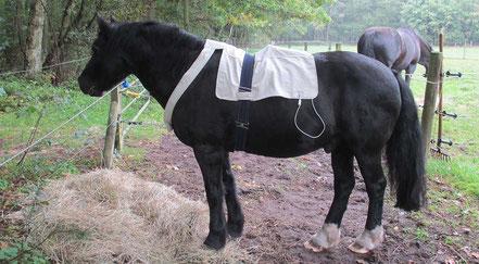 Bioresonanz am Pferd - Mobile Tierheilpraxis Rüth