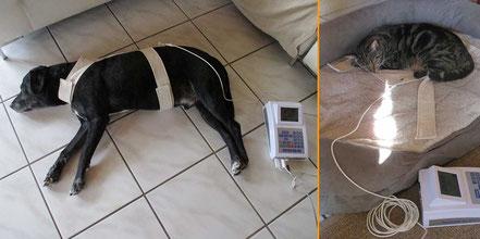 Bioresonanz an Hund und Katze - Mobile Tierheilpraxis Rüth