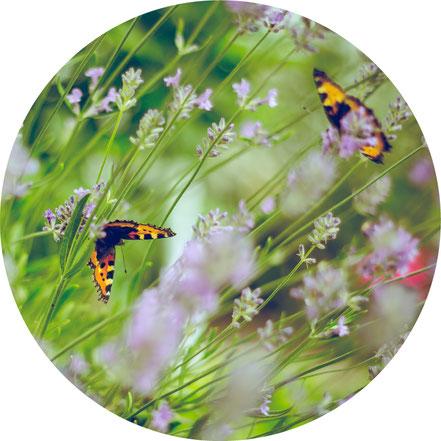 Garten-Planung, Neugestaltung von Rasenflächen, Gartenzaun montieren, Zaun reparieren, Rollrasen anlegen, Rasenpflege, Pflanzen pflegen, Formschnitt, Baumpflege, Entsorgen von Garten Gartenabfall