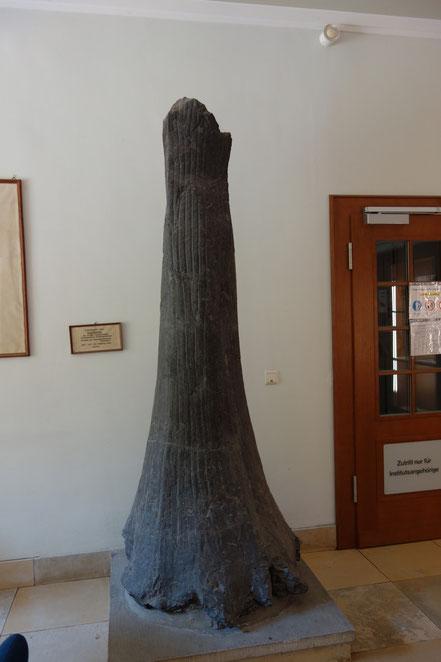 Versteinerter Baum im Botanischen Institut
