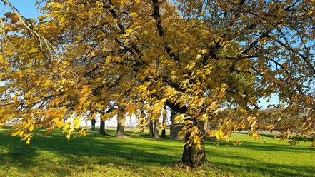 Wanderungen durch den Herbst @Wandelsinn