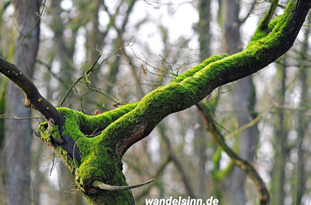 In der Natur - Maasduinen ©wandelsinn Geertje Jürgens-Wallasch
