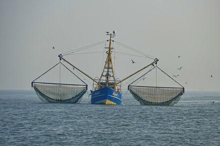 Fischerboot vor Amrum ©wandelsinn Geertje Jürgens-Wallasch