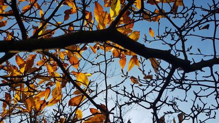 Blätter am Himmel ©wandelsinn