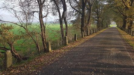 Feldwege in Vernum, Niederrhein ©wandelsinn