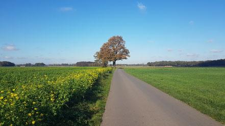 Feldwege in Vernum, Niederrhein
