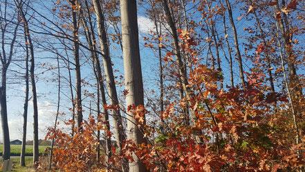 Herbst am Niederrhein in Vernum