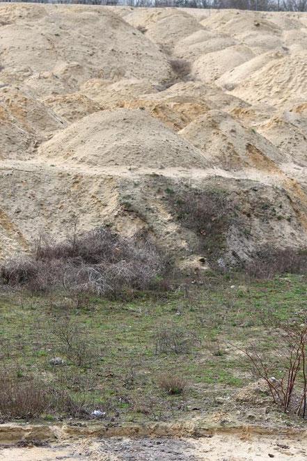Oberbillwerder zerstört Natur