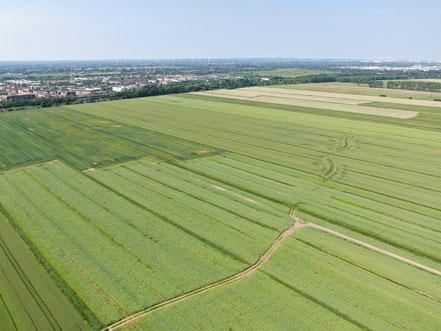 Billwerder Luftaufnahme