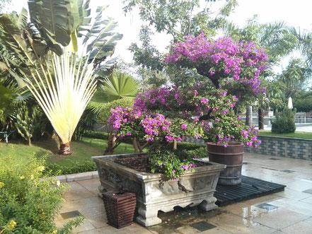 Sa Huynh Resort Tropische Pflanzen