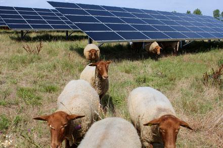 location de terrain solaire photovoltaique