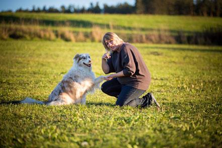 Allgemeinwissen über Hunde, wie verhalte ich mich richtig