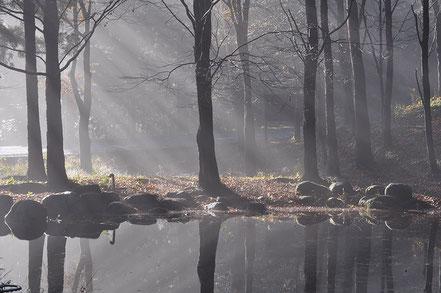 【審査員特別賞】酒井芳郎「ながた自然公園の朝」