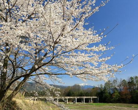 【特選】片桐利秀「水路橋 桜咲くころ」